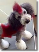 犬の写真5
